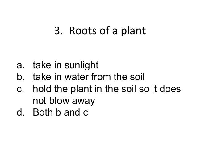 4. The stem of a planta. takes in sunlightb. takes in water from the soilc. carries the water from the roots to   the leav...