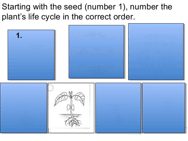 Congratulations!You have learned about the parts of a plant,  about seeds, and about a plant's life cycle.