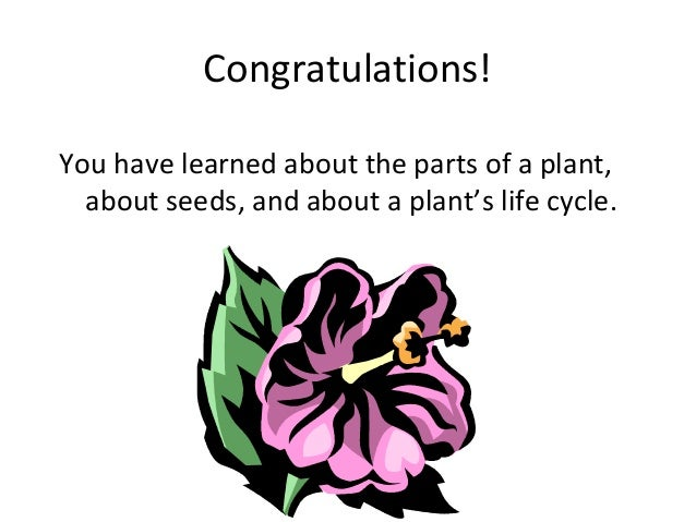 Parts of a plant/plant life cycle (teach)