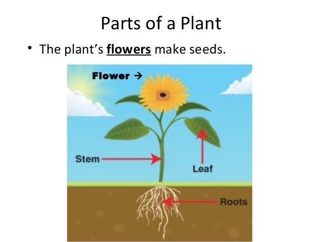 24 best plant parts images on pinterest plant parts parts of a plant image gallery labeling a plant ks1 ccuart Images