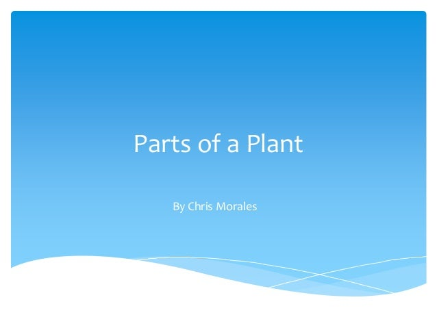 Parts of a Plant By Chris Morales