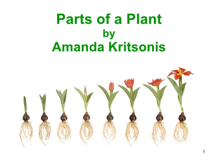 Parts of a Plant by Amanda Kritsonis