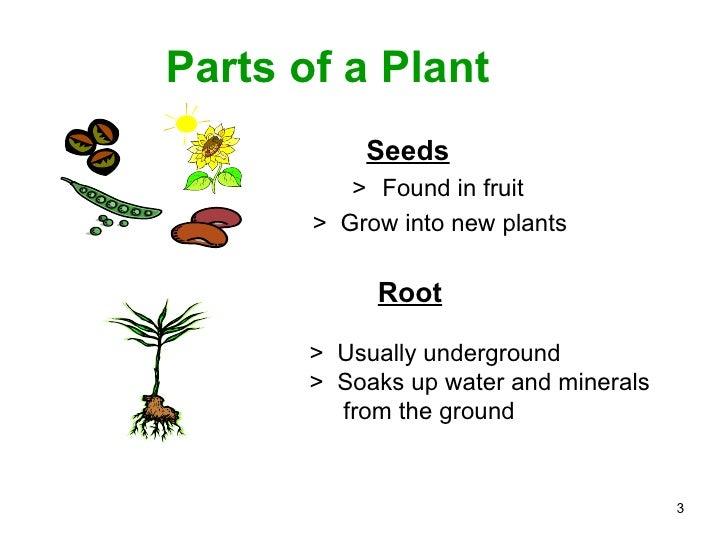 Parts of a plant ppt Slide 3