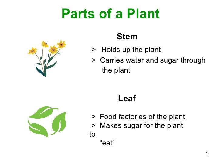 Plant ppt.