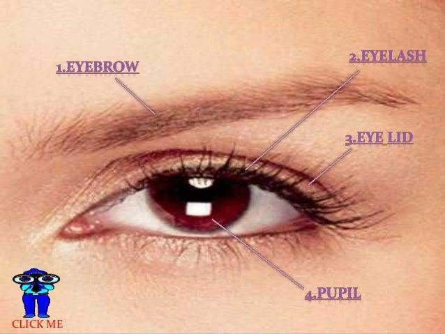 parts of eyes, Sphenoid