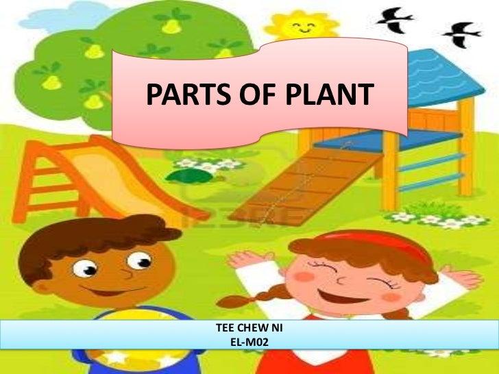 PARTS OF PLANT    TEE CHEW NI      EL-M02
