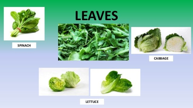 LEAVES SPINACH LETTUCE CABBAGE