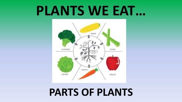 PLANTS WE EAT… PARTS OF PLANTS