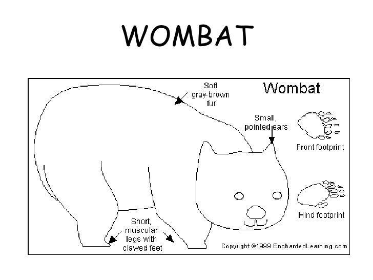 Parts Of The Body Of Australian Animals