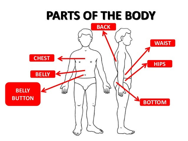 Parts Of The Body 8 638gcb1399897318