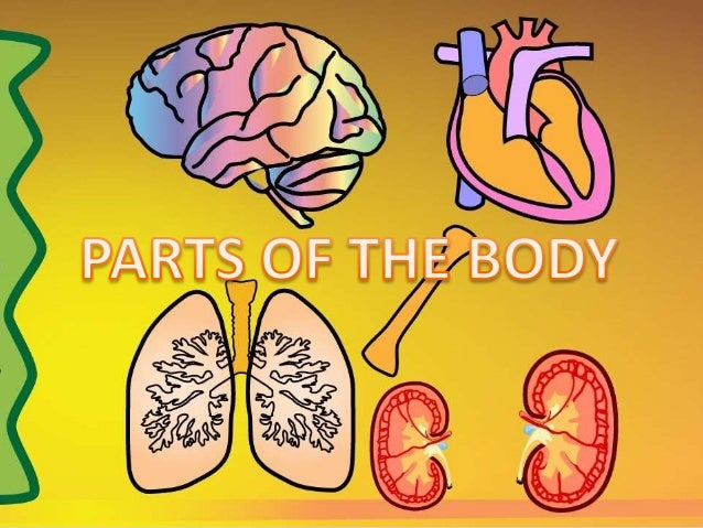 REVIEW: PARTS OF THE BODY