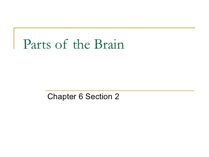 Parts of the Brain Chapter 6 Section 2