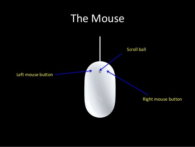 parts of a mouse