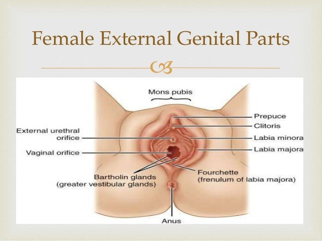 Female Sexual Parts 86