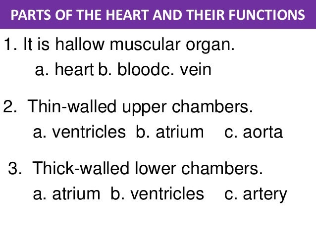 Parts of the heart and their functions parts of the heart and their functions ccuart Choice Image