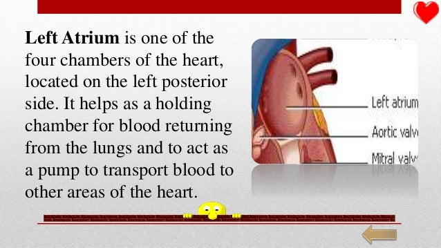 Detailed parts of the heart the circulatory system 12 ccuart Images