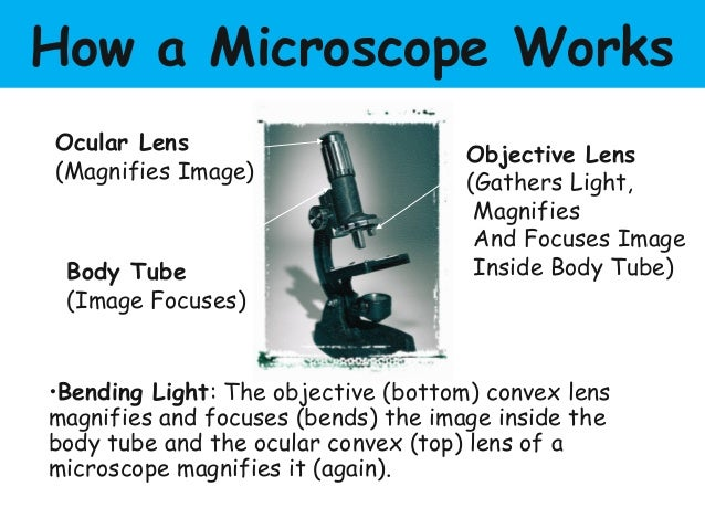 Parts of the microscope and their functions