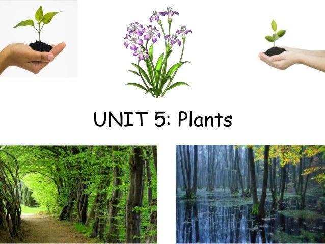 UNIT 5: Plants