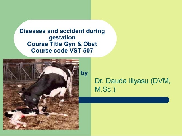 Diseases and accident during gestation Course Title Gyn & Obst Course code VST 507 Dr. Dauda Iliyasu (DVM, M.Sc.) by