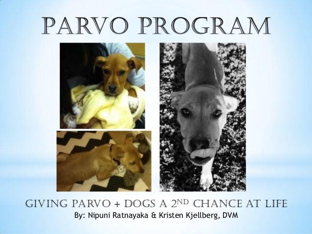 Giving Parvo + DOGS a 2nd Chance at Life By: Nipuni Ratnayaka & Kristen Kjellberg, DVM
