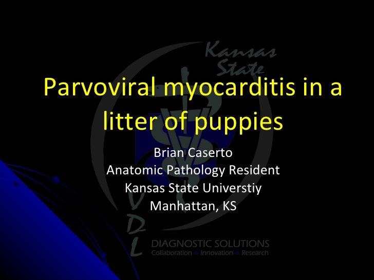 Parvoviral myocarditis in a litter of puppies Brian Caserto Anatomic Pathology Resident Kansas State Universtiy Manhattan,...
