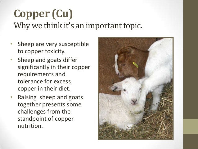 Importance of copper in osteoporosis