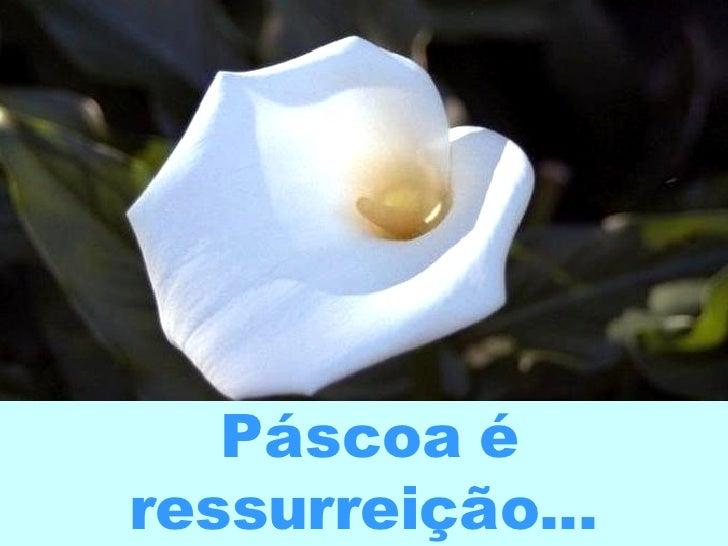 Páscoa é ressurreição...