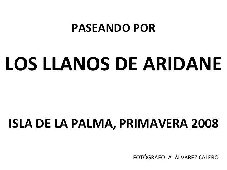 PASEANDO POR LOS LLANOS DE ARIDANE ISLA DE LA PALMA, PRIMAVERA 2008 FOTÓGRAFO: A. ÁLVAREZ CALERO