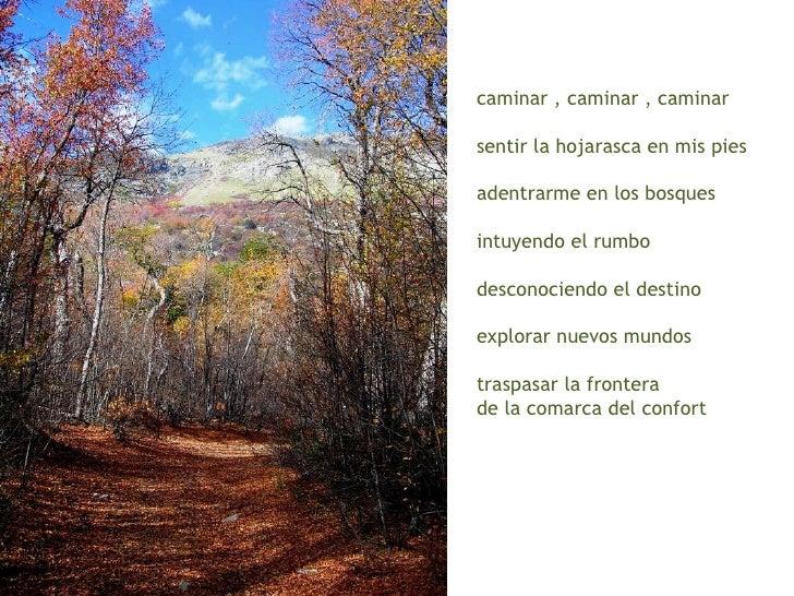 caminar , caminar , caminar sentir la hojarasca en mis pies adentrarme en los bosques intuyendo el rumbo desconociendo el ...