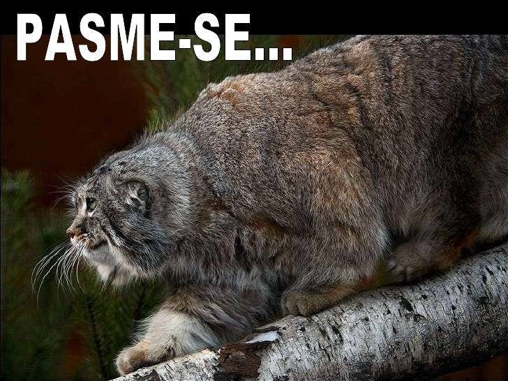 PASME-SE...