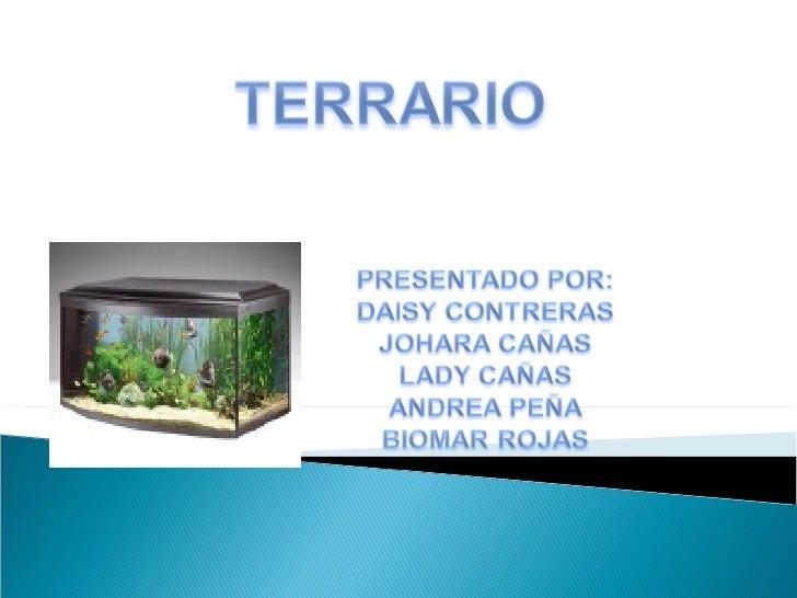 Pasos para la elaboraci n de un terrario - Como construir un terrario ...