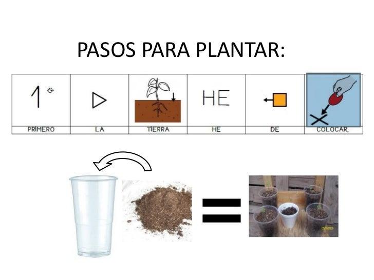 PASOS PARA PLANTAR: