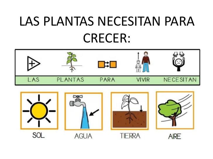 Pasos para plantar 1 for Pasos para sembrar una planta