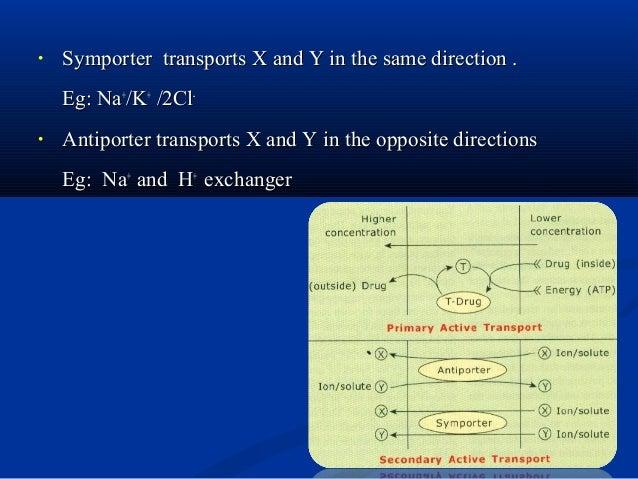 • ABC transporters transporter molecules such as -ions, sugars, amino acids, vitamins, peptides, polysaccharides, hormones...