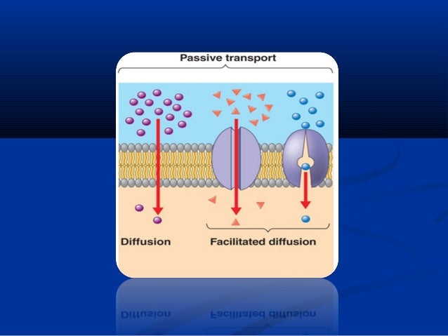 Facilitated diffusion : •  Carrier-mediated transport from higher to lower concentration without needing energy and transl...