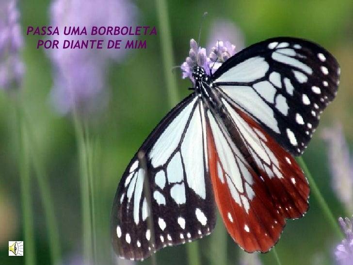 PASSA UMA BORBOLETA POR DIANTE DE MIM