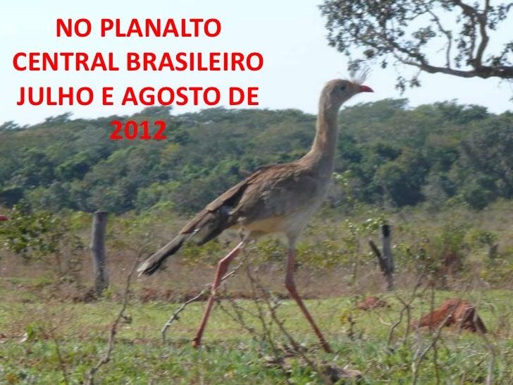 NO PLANALTOCENTRAL BRASILEIROJULHO E AGOSTO DE       2012