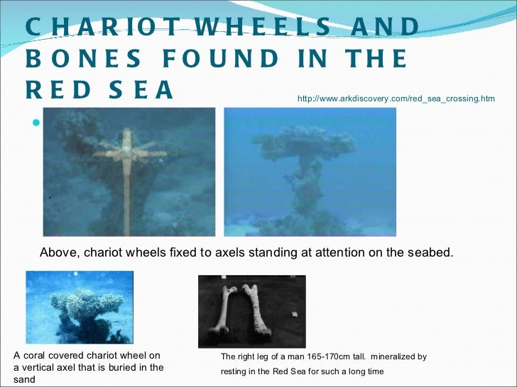 Passover presentation by dr chloe cummings chariot wheels and bones found in the red sea sciox Gallery
