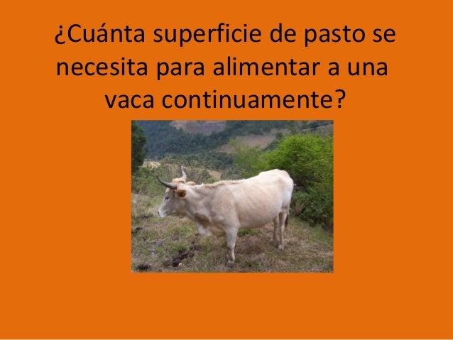 ¿Cuánta superficie de pasto se necesita para alimentar a una vaca continuamente?