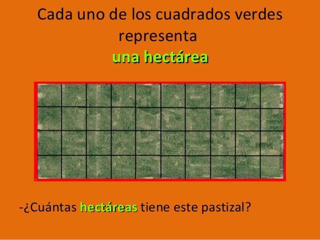 Pastizales 1 for Cuanto es 35 metros cuadrados
