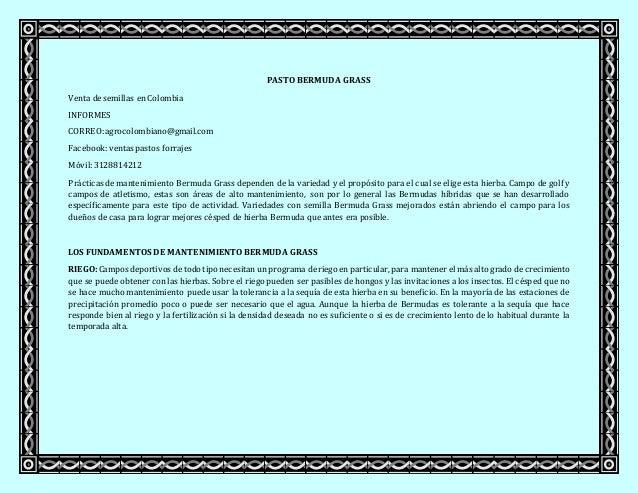 PASTO BERMUDA GRASS Venta de semillas en Colombia INFORMES CORREO:agrocolombiano@gmail.com Facebook:ventas pastos forrajes...