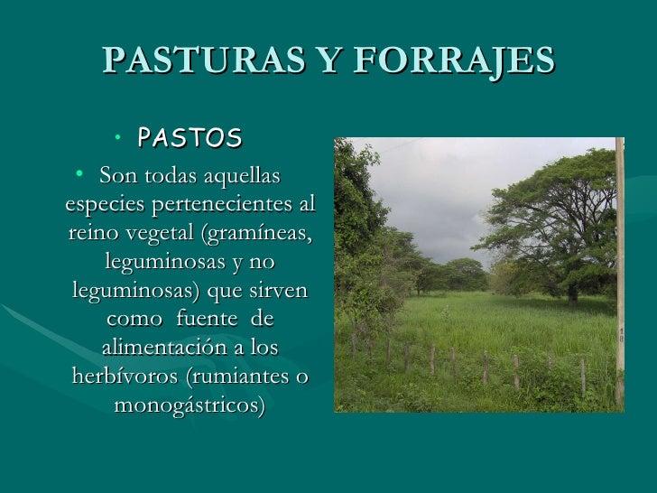 PASTURAS Y FORRAJES <ul><li>PASTOS </li></ul><ul><li>Son todas aquellas especies pertenecientes al reino vegetal (gramínea...