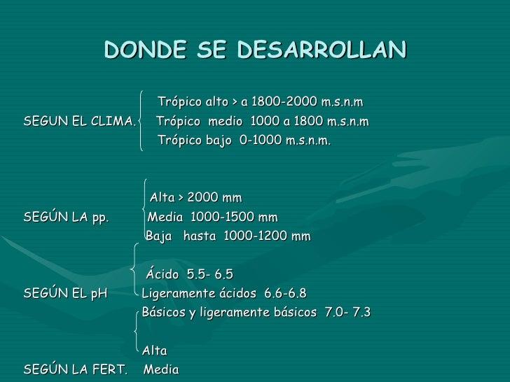 DONDE SE DESARROLLAN Trópico alto > a 1800-2000 m.s.n.m SEGUN EL CLIMA.  Trópico  medio  1000 a 1800 m.s.n.m Trópico bajo ...