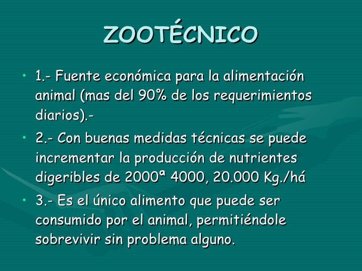ZOOTÉCNICO <ul><li>1.- Fuente económica para la alimentación animal (mas del 90% de los requerimientos diarios).- </li></u...