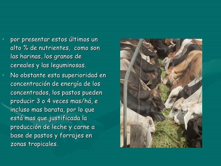 <ul><li>por presentar estos últimos un alto % de nutrientes,  como son las harinas, los granos de cereales y las leguminos...