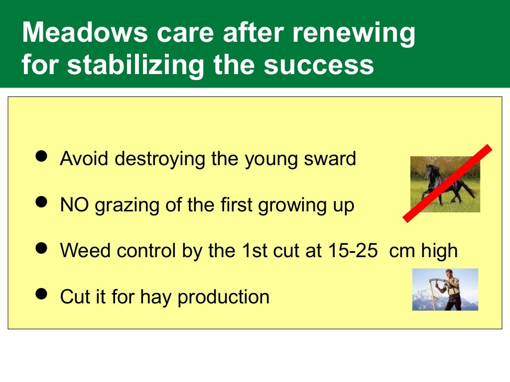 Meadows care after renewing for stabilizing the success  Avoid destroying the young sward  NO grazing of the first growi...
