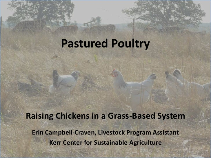 Pastured PoultryRaising Chickens in a Grass-Based System Erin Campbell-Craven, Livestock Program Assistant       Kerr Cent...