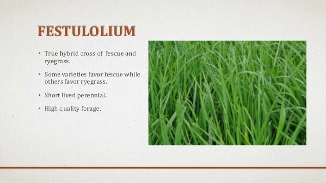 Sorghum Sudangrass Seed Size
