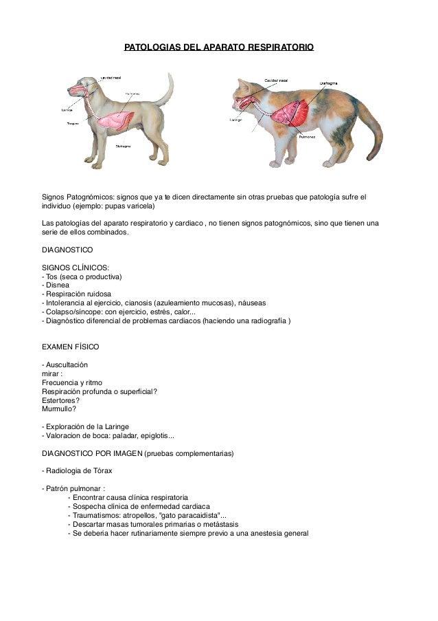PATOLOGIAS DEL APARATO RESPIRATORIO! ! ! ! ! ! ! !! ! ! ! !!!Signos Patognómicos: signos que ya te dicen directamente sin ...