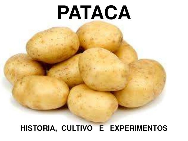 PATACA HISTORIA, CULTIVO E EXPERIMENTOS